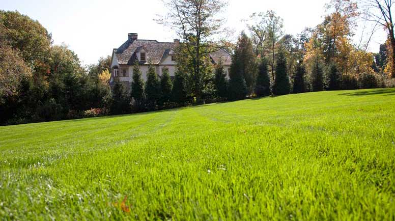how to kill grass and weeds forever