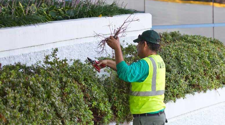 Landscape Maintenance Budgeting