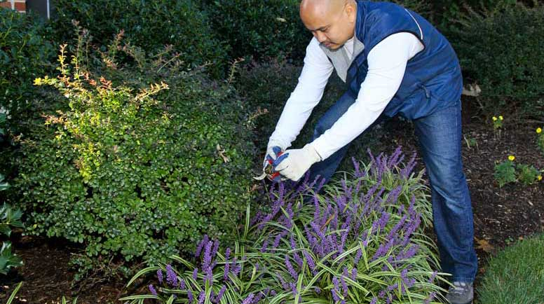 - Eco-Friendly Landscaping