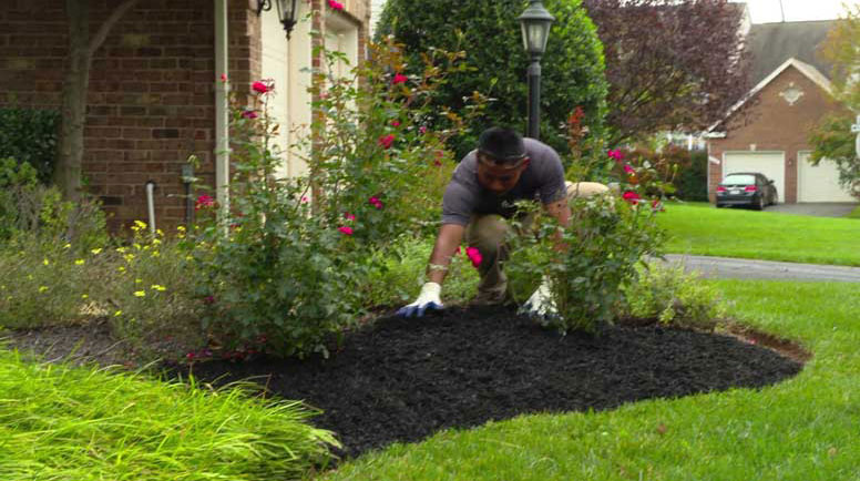 Mulching Tips From The Pros