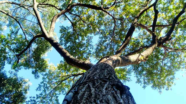 Value of mature trees noise reduction