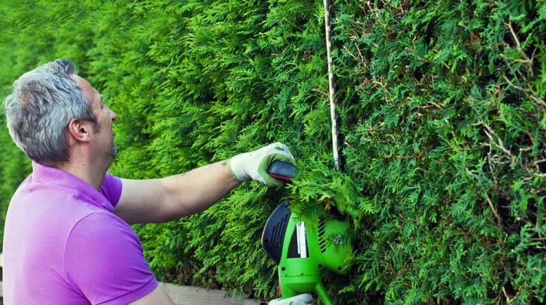 Cutting-the-hedge-000020307901_Large.jpg