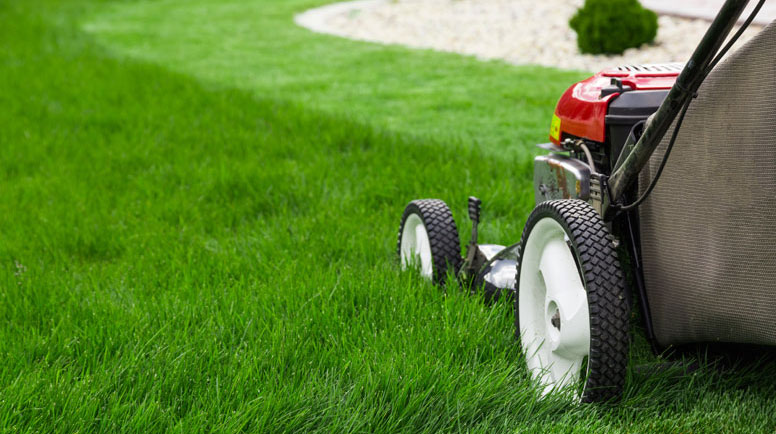 Lawn-mower-000065689711_Medium.jpg (1)