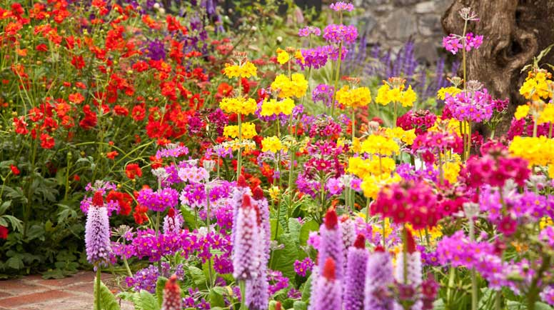 Colorful-Flower-bed-000020477452_Large - Copy.jpg