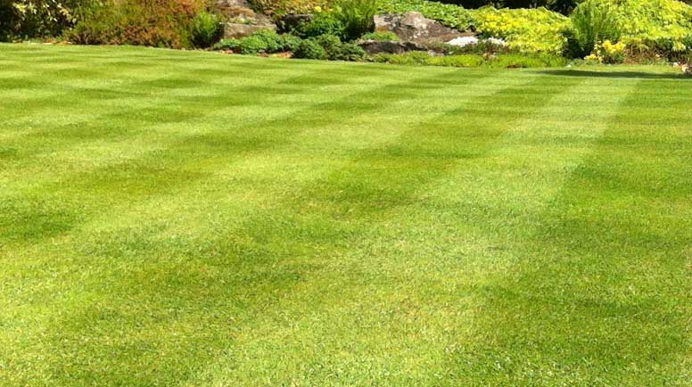 Image-of-garden-lawn-stripes,-green-grass-turf - Creating And Maintaining Healthy Soil