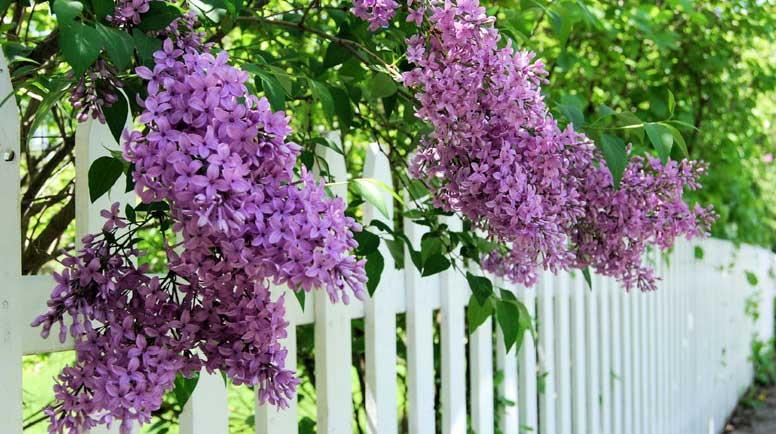 The Best Flowering Shrubs For Spring And Summer