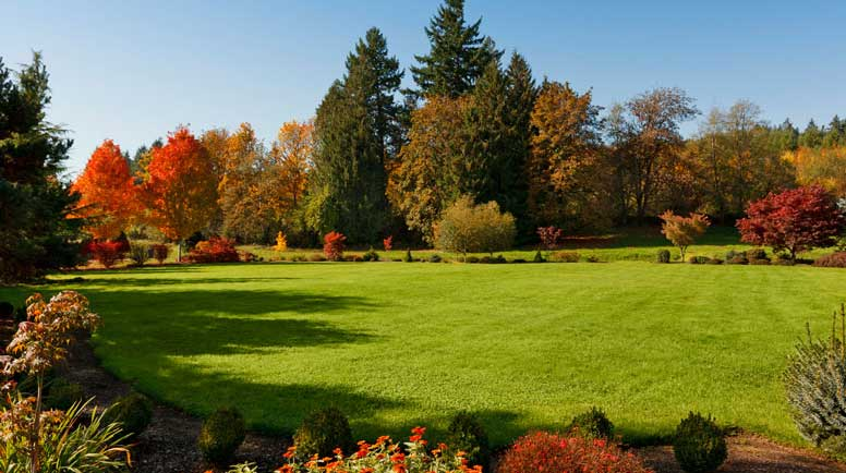 Expansive-Lawn-000040135426_Medium - Copy - Copy.jpg