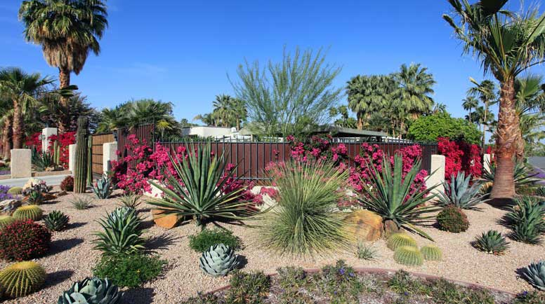 Spectacular-Water-Conservation-Gardening-With-Cactus-And-Succulents-000064591909_Large.jpg