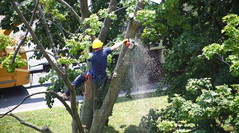 Worker-cutting-a-tree-branch-with-a-chainsaw-000038260056_Large.jpg