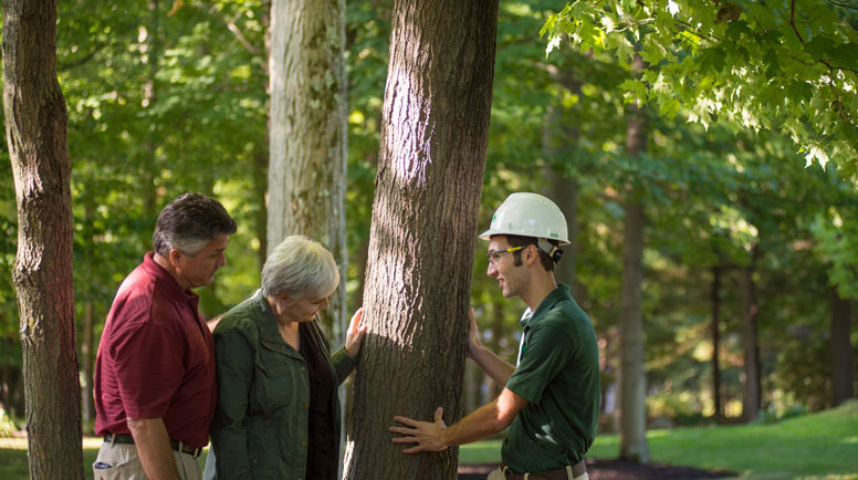 A-Certified-Arborist-can-help-you-proactively-inspect-your-trees.jpg