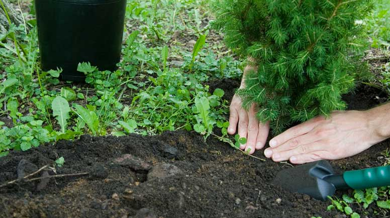 Close-Up-of-Tree-Planting-000006541338_Large.jpg