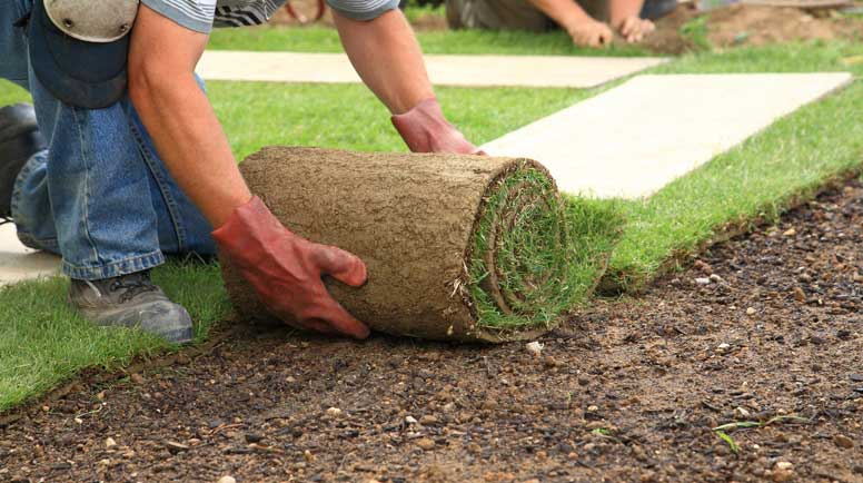 Laying-sod-for-new-lawn-000012697419_Large.jpg