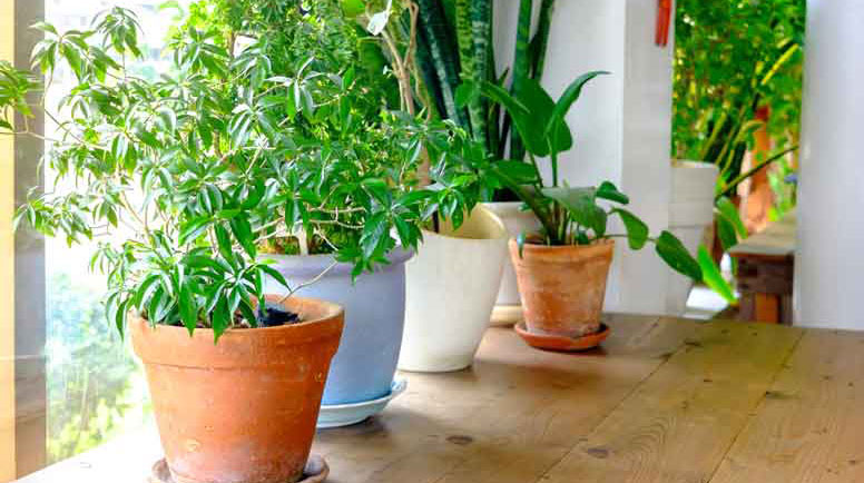 Plant-pot-displayed-in-the-window-000072967207_Large.jpg