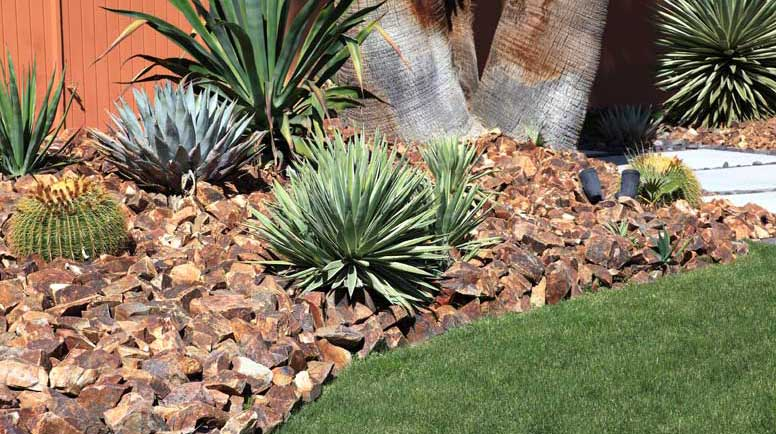 Conserving-Water-By-Gardening-With-Cactus-And-Succulents-000036567466_Large.jpg