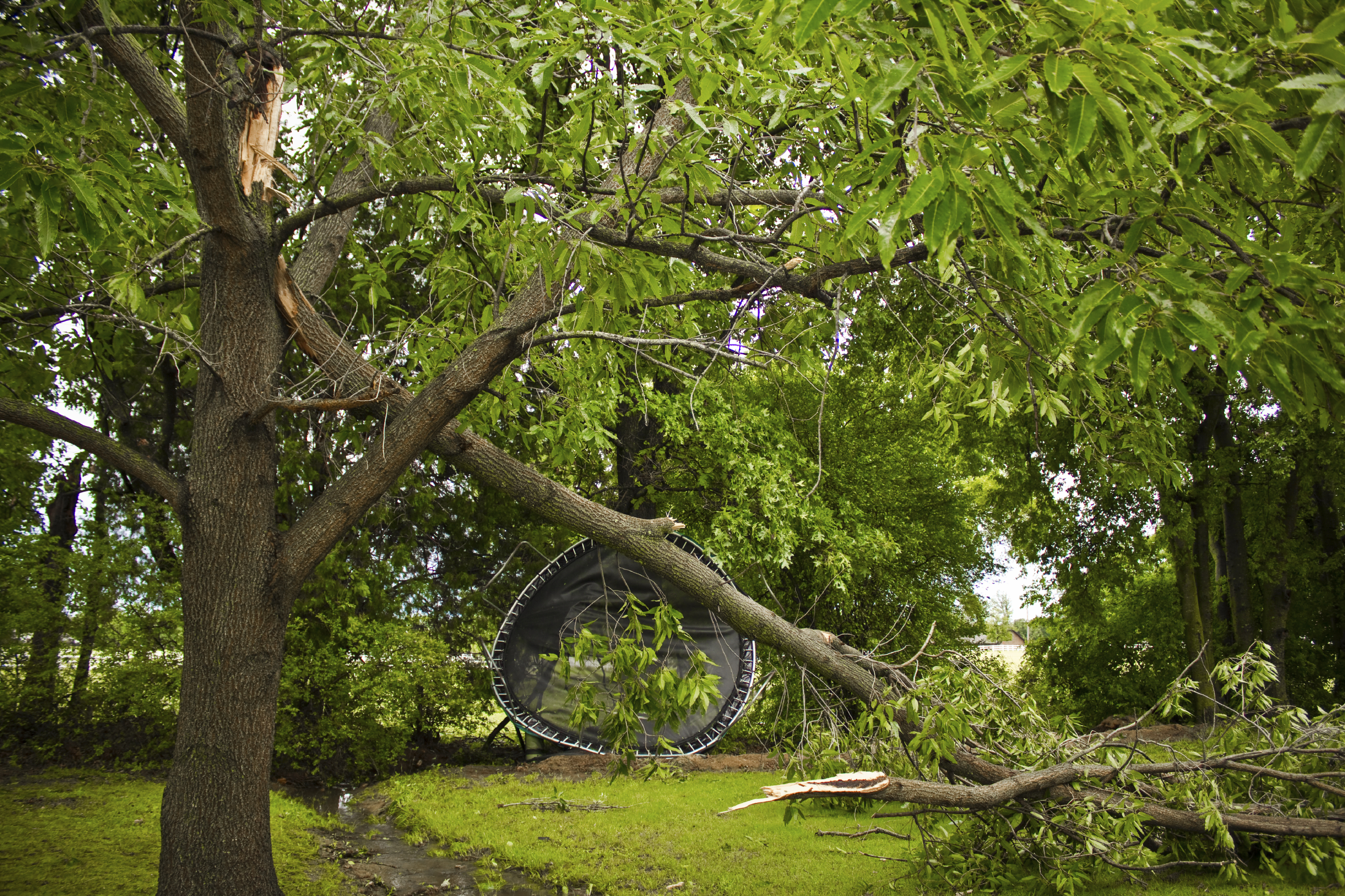 Storm-Damage-Tree-000041553368_Large.jpg