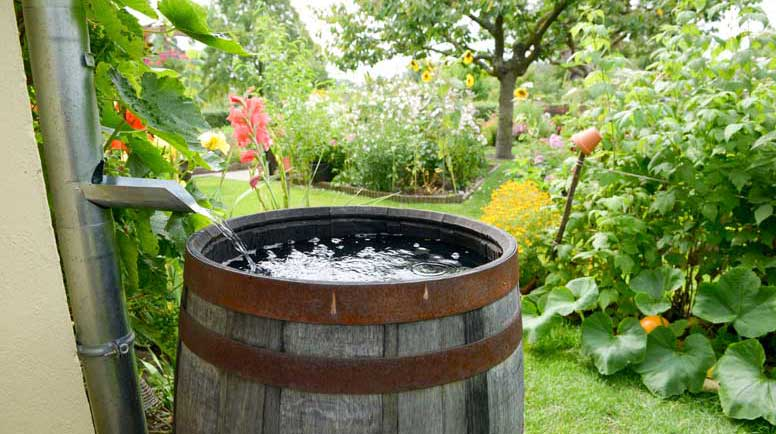 rain-barrel-000045018088_Large.jpg