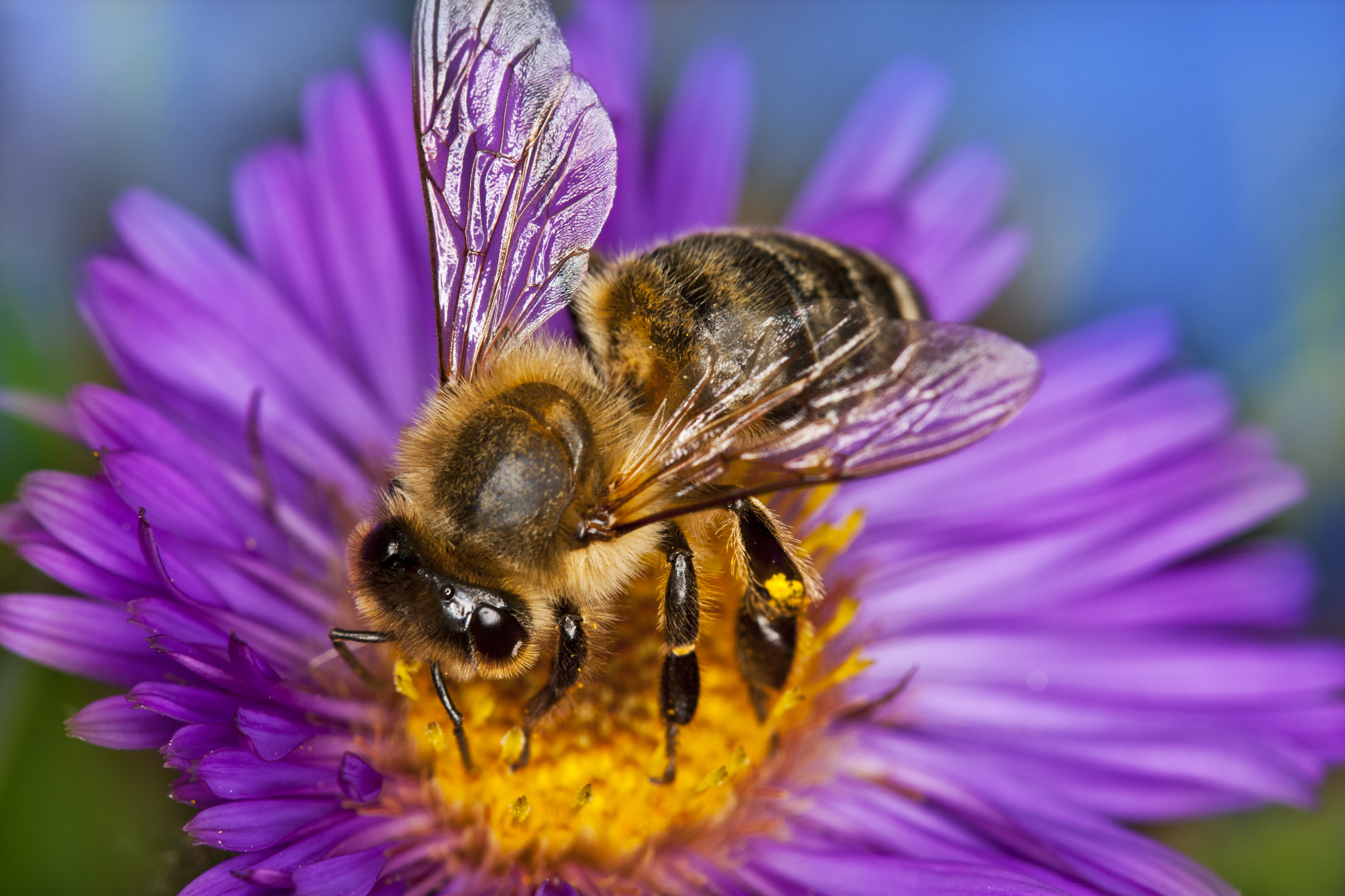 honey-bee-000016378296_Full.jpg