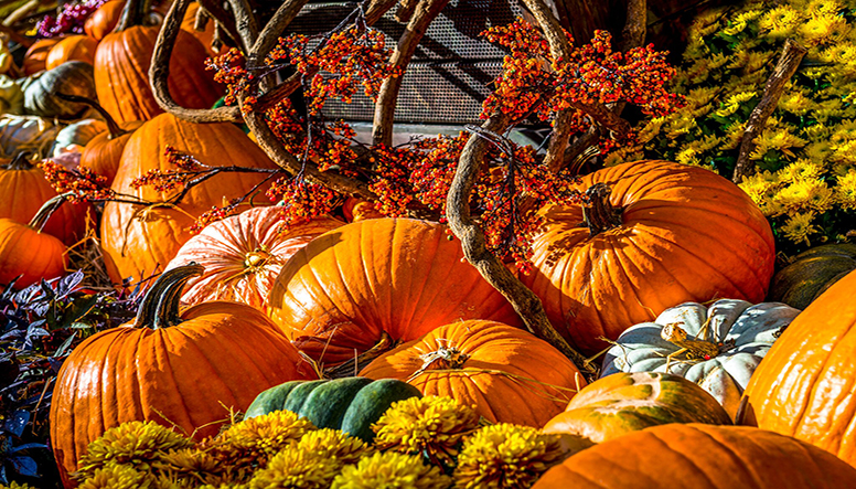 9 IDEAS FOR A FABULOUS FALL YARD