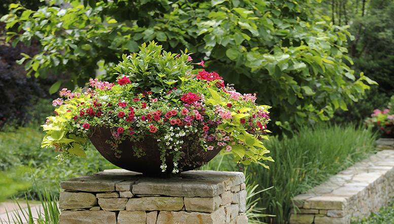 Love your landscape for Good filler plants for landscaping