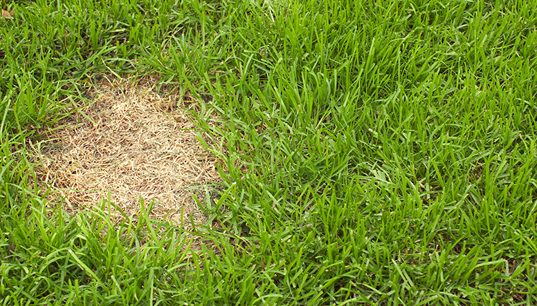 Patch-of-dead-grass-000015910542_Resized.jpg