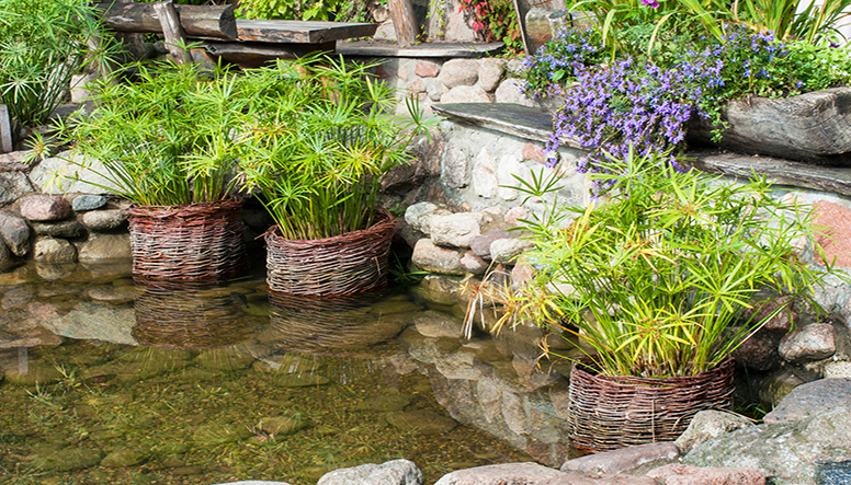 pond with baskets of plants.jpg