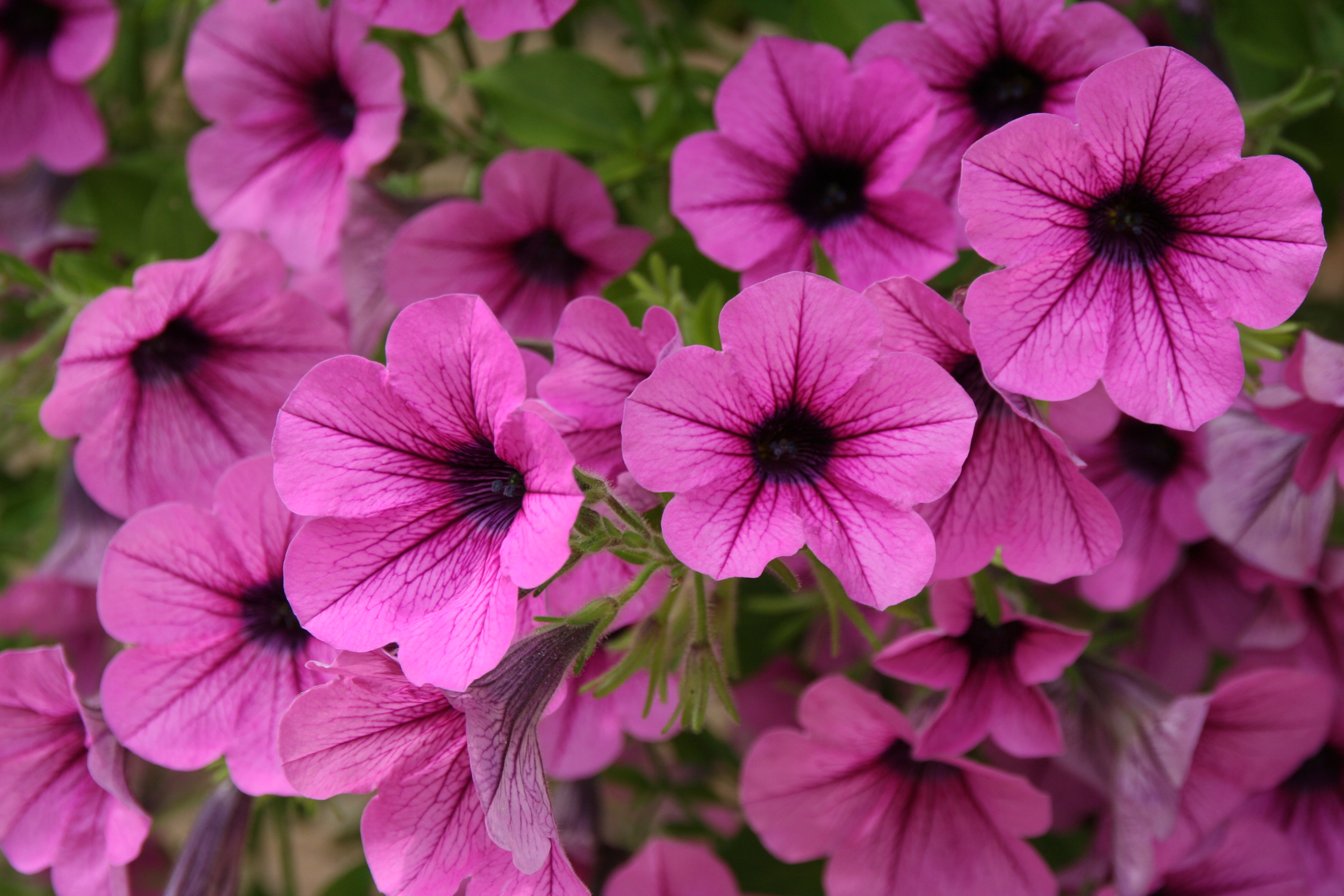 7 Most Colorful Annuals For Spring