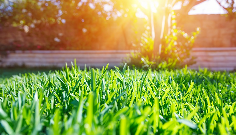 5 common lawn care mistakes